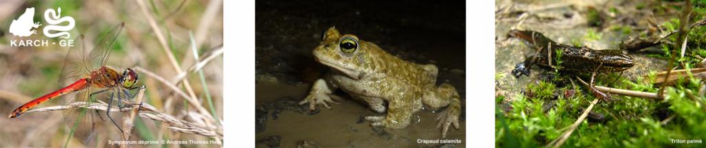 Biodiversité dans les plans d'eau temporaires